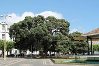 Sao Miguel: Ponta Delgada Hauptplatz mit Pfarrkirche