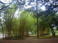 Botanischer Garten in Ponta Delgada