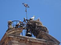Salamanca - Martinskirche und Störche