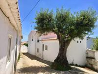 Tag 3 - Olivenbaum im Dorf Penina