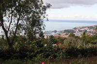 Blick auf den Hafen von Funchal