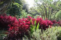 Garten der Familie Blandy_47