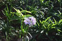 Garten der Familie Blandy_5