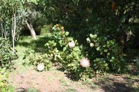 Garten der Familie Blandy_66