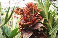 Orchideengarten_6