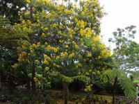 Botanischer Garten von Funchal - der Stolz Boliviens
