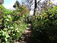 Wanderung entlang der Levada da Serra do Faial