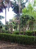 Im Botanischen Garten von Madeira