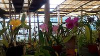 Quinta Boa Vista Orchidea,