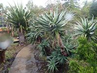 Funchal - Botanischer Garten