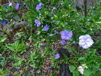 Quinta Boa Vista - Orchideengarten, Gestern, Heute, Morgen
