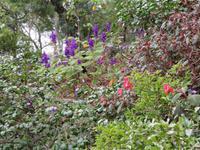 75-Botanischer Garten Funchal3