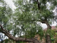 85-Botanischer Garten