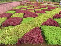 88-Botanischer Garten von Funchal