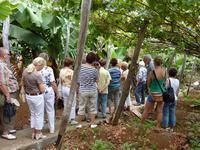Madeiraweinanbau