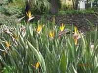 IMG_2991 Zu Besuch im Botanischen Garten von Funchal
