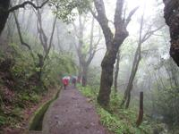 Levada-Wanderung in Ribeiro Frio