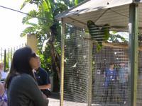 Dialog mit den Papageien