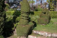 in Blandys Garden (Quinta do Palheiro)