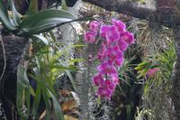 Orchideen und Tillandsien