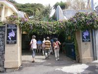 JardimOrchidea - Orchideen Garten