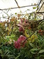im Orchideen Garten
