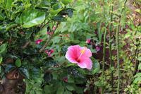 Im Garten der Familie Blandy