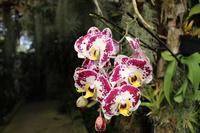 Im Orchideen-Garten in Funchal