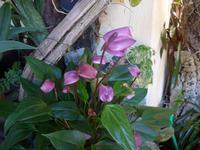 Madeira, Funchal, Orchideen- Fundation, Anturien