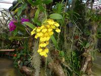 Madeira, Funchal, Orchideen- Fundation