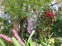 Orchideenpracht im