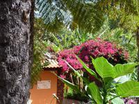 Blütenpracht in der Quinta Splendida