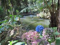 8 Jardim Tropical Garden