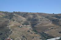 Die Weinberge im wunderschönen Douro-Tal