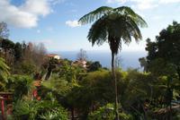 Im Tropischen Garten Monte Palace in Funchal