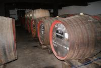 Blandy's Wine Lodge (3)