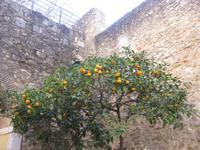 Stadtrundgang Lissabon - Orangenbäume am Eingang zum Castelo de Sao Jorge