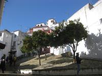 Stadtrundgang Lissabon - Orangenbäume in der Alfama