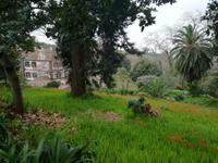 Blandys Garten