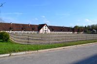 Gestüt Georgenburg bei Insterburg