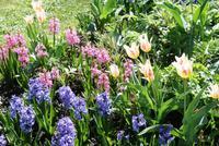 Frühling in Peterhof