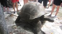 Vogel-Insel Cousin - die älteste Schildkröte der Insel