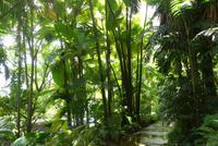 Botanischer Garten auf Mahe