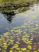 Teich vor Schloss Gripsholm