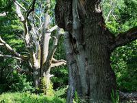 2240 Bäume wie Skulpturen