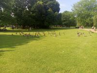 Der Park in Kiel