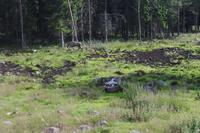 Elche in Gronäsen