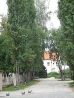 Varazin