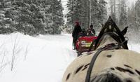 Winterwald in Strbske Pleso