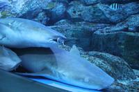 Sentosa Islands - Sea Aquarium